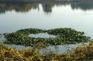 Kerkini Lake_6